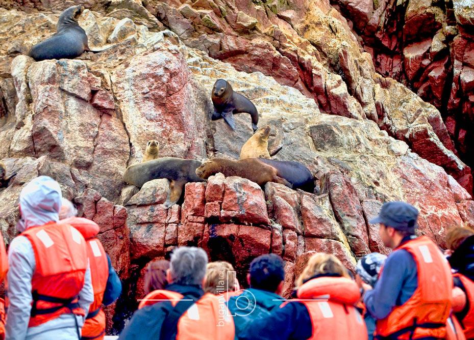 Tour-Islas-Ballestas