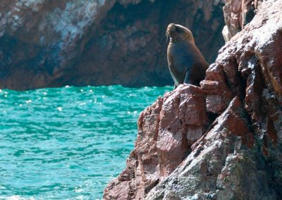 Chincha Ballestas Islands Tour