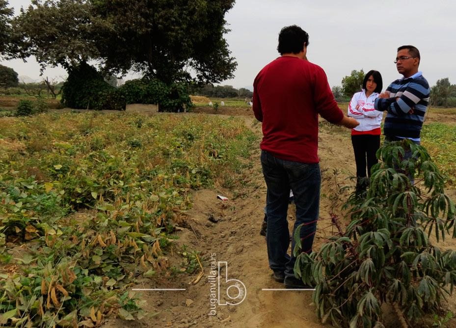 Tour Agrícola desde Lima